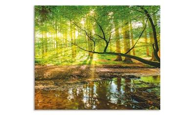 "Artland Küchenrückwand ""Wald mit Bach"", (1 - tlg.) kaufen"