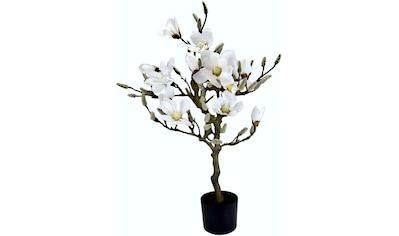 I.GE.A. Kunstbaum »Magnolienbaum«, im Kunststofftopf kaufen