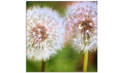 Artland Glasbild »Pusteblume Zweisamkeit« kaufen