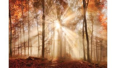 CONSALNET Fototapete »Sonniger Wald im Herbst«, Vlies, in verschiedenen Größen kaufen