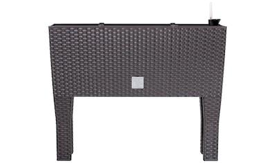Prosperplast Pflanzkübel »Rato case high«, BxTxH: 60x25x46 cm kaufen