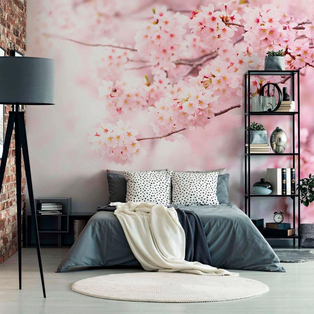 living walls Fototapete »Kirschblüte Cherry Blossum«, Vlies