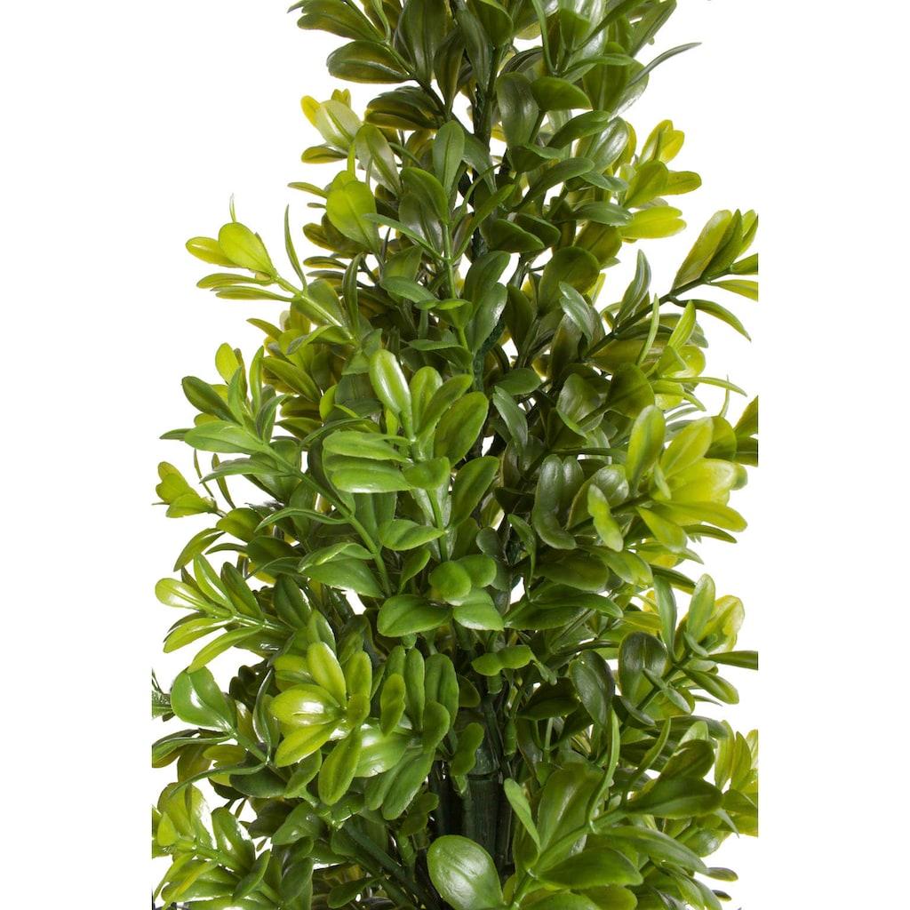 Botanic-Haus Künstliche Zimmerpflanze »Buchsbaum im Topf«