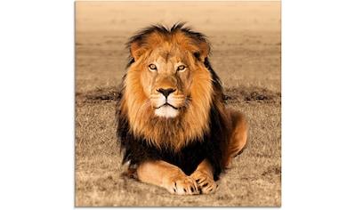 Artland Glasbild »Löwe« kaufen
