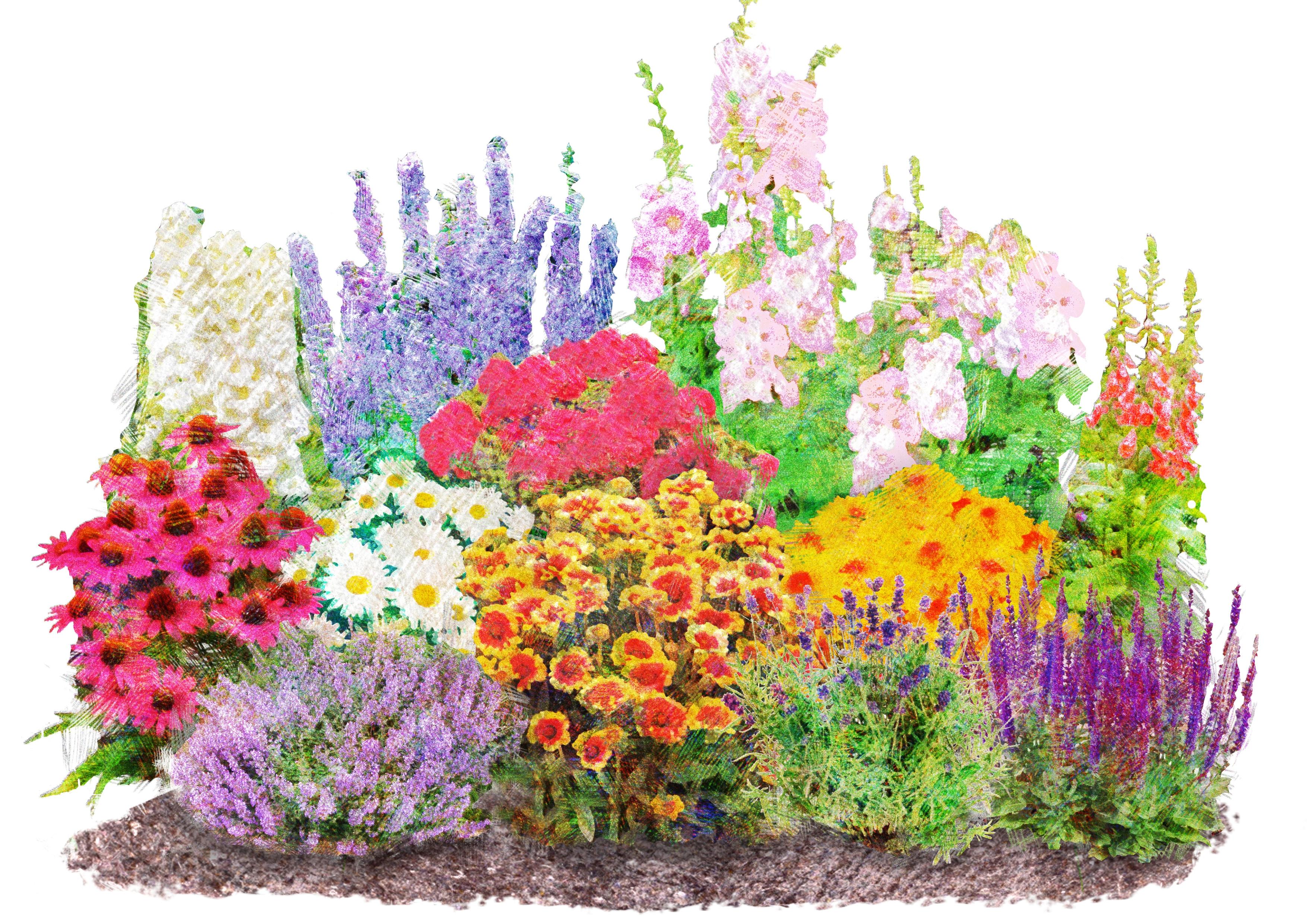 BCM Beetpflanze Landhausgarten, (Set), 12 Pflanzen bunt Beetpflanzen Garten Balkon