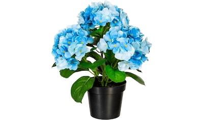 Creativ green Kunstpflanze »Hortensienbusch« kaufen