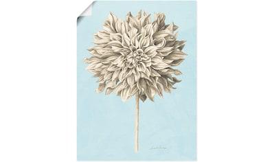 Artland Wandbild »Grafische Blumenlehre III«, Blumen, (1 St.), in vielen Größen & Produktarten - Alubild / Outdoorbild für den Außenbereich, Leinwandbild, Poster, Wandaufkleber / Wandtattoo auch für Badezimmer geeignet kaufen