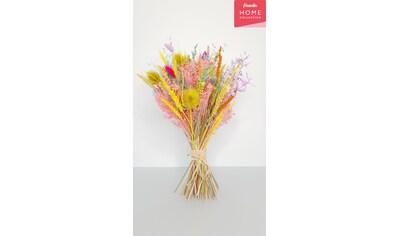 freundin Home Collection Trockenblume »Lollipop«, Blumenstrauß kaufen