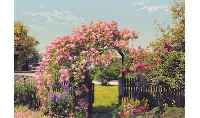 Komar Fototapete »Rose Garden«, bedruckt-Wald-geblümt, ausgezeichnet lichtbeständig kaufen