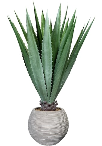 Creativ green Künstliche Zimmerpflanze »Agave« (1 Stück) kaufen