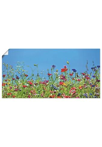 Artland Wandbild »Blumenwiese II« kaufen