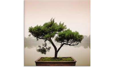 Artland Glasbild »Chinesischer Bonsaibaum«, Bäume, (1 St.) kaufen