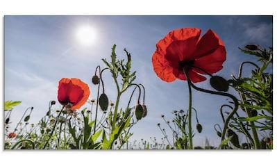 Artland Glasbild »Mohnblumen im Frühling«, Blumenwiese, (1 St.) kaufen