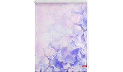 LICHTBLICK Seitenzugrollo »Klemmfix Motiv Hortensie«, Lichtschutz, ohne Bohren, freihängend, bedruckt kaufen
