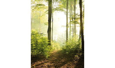 Marburg Fototapete, gut lichtbeständig, restlos abziehbar kaufen