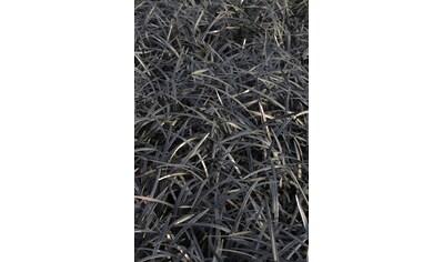 BCM Staude »Schlangenbart Gras« kaufen
