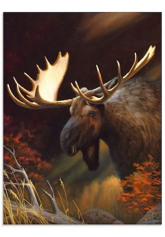 Artland Glasbild »Elch Foto«, Wildtiere, (1 St.) kaufen