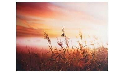 Art for the home Leinwandbild »Wiese im Sonnenaufgang«, Natur, mit Metallic-Effekt kaufen