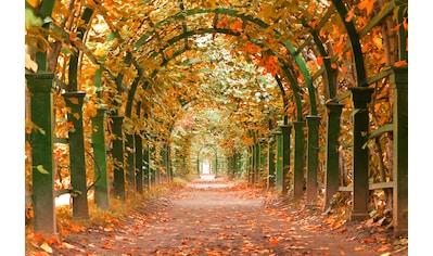 Papermoon Fototapete »Autumn Garden« kaufen