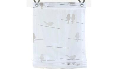 Raffrollo »Birds«, Kutti, mit Hakenaufhängung, ohne Bohren kaufen