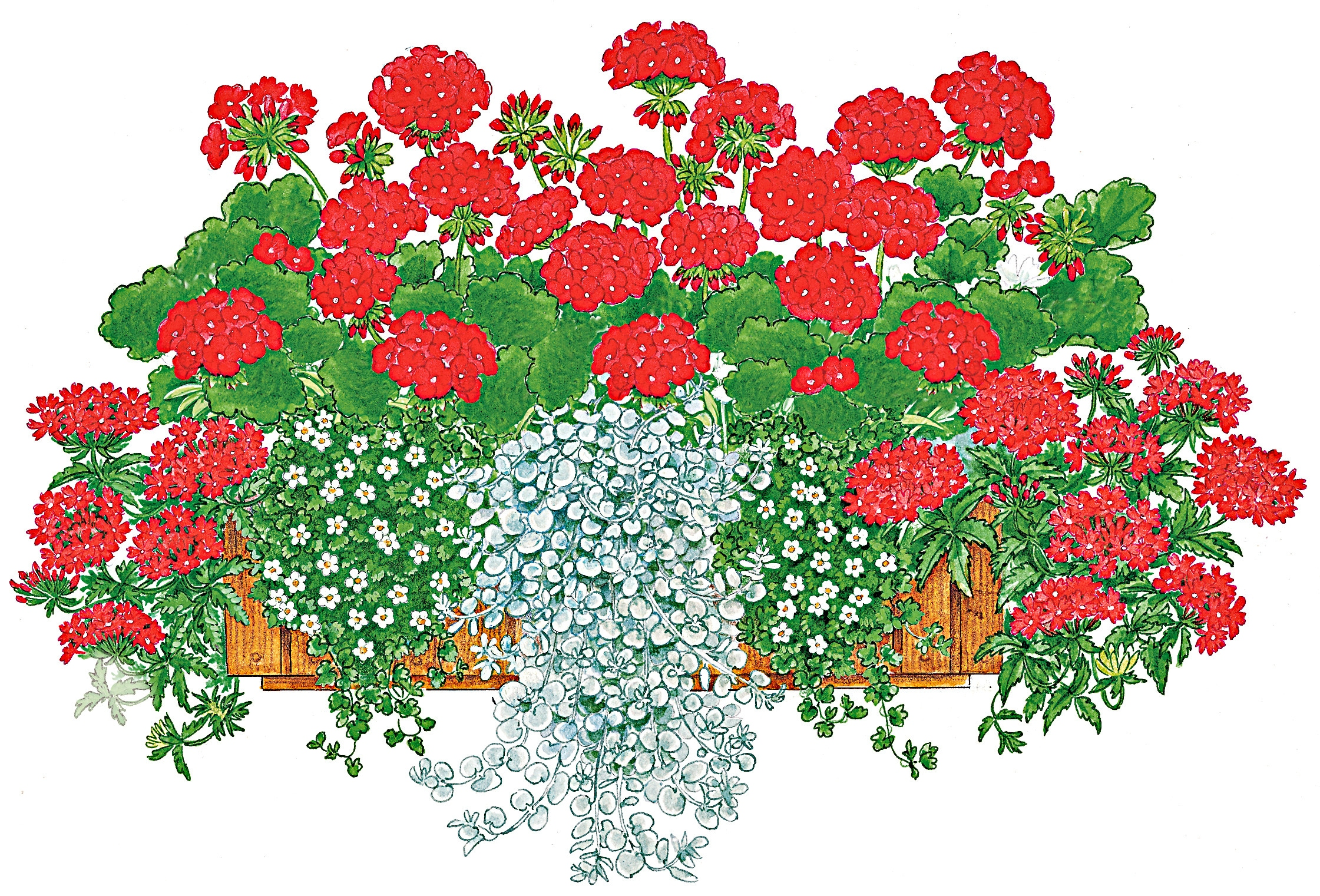 BCM Balkonpflanze Farbfeuer, 8 Pflanzen mit Erde bunt Balkonpflanzen Garten Balkon
