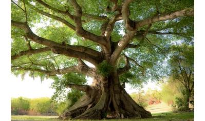 PAPERMOON Fototapete »Peaceful Tree«, Vlies, in verschiedenen Größen kaufen