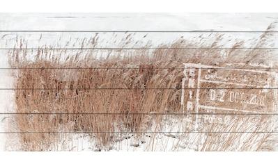 queence Holzbild »Schilf in den Dünen«, 40x80 cm kaufen
