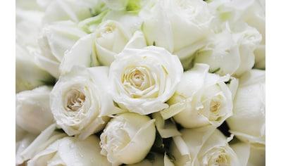 Papermoon Fototapete »White Roses« kaufen