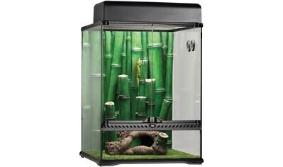 Exo Terra Terrarium »Bamboo Forest Kit«, BxTxH: 45x45x60 cm kaufen