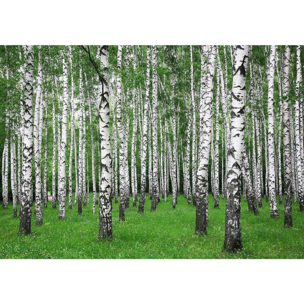 Papermoon Fototapete »Summer Birch Forest«