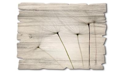 Artland Holzbild »Pusteblumen-Samen I«, Blumen, (1 St.) kaufen