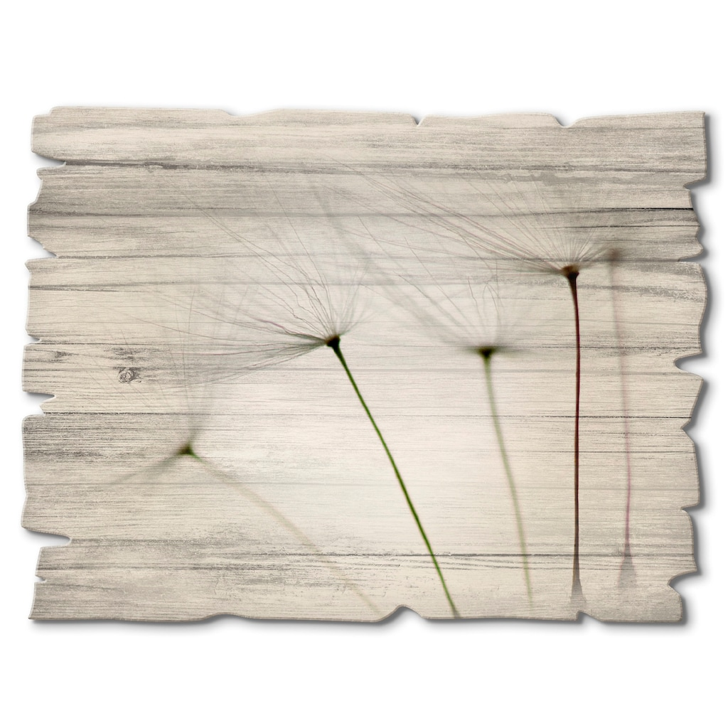 Artland Holzbild »Pusteblumen-Samen I«, Blumen, (1 St.)