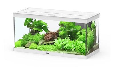 AQUATLANTIS Set: Aquarium »Style 80 LED 2.0«, 86 Liter, BxTxH: 80x35x40 cm, in versch. Farben kaufen