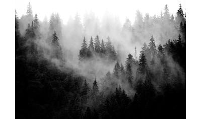 Consalnet Vliestapete »Wald im Nebel« kaufen