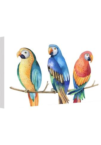 Wall-Art Leinwandbild »Kvilis - Bunte Papageien« kaufen