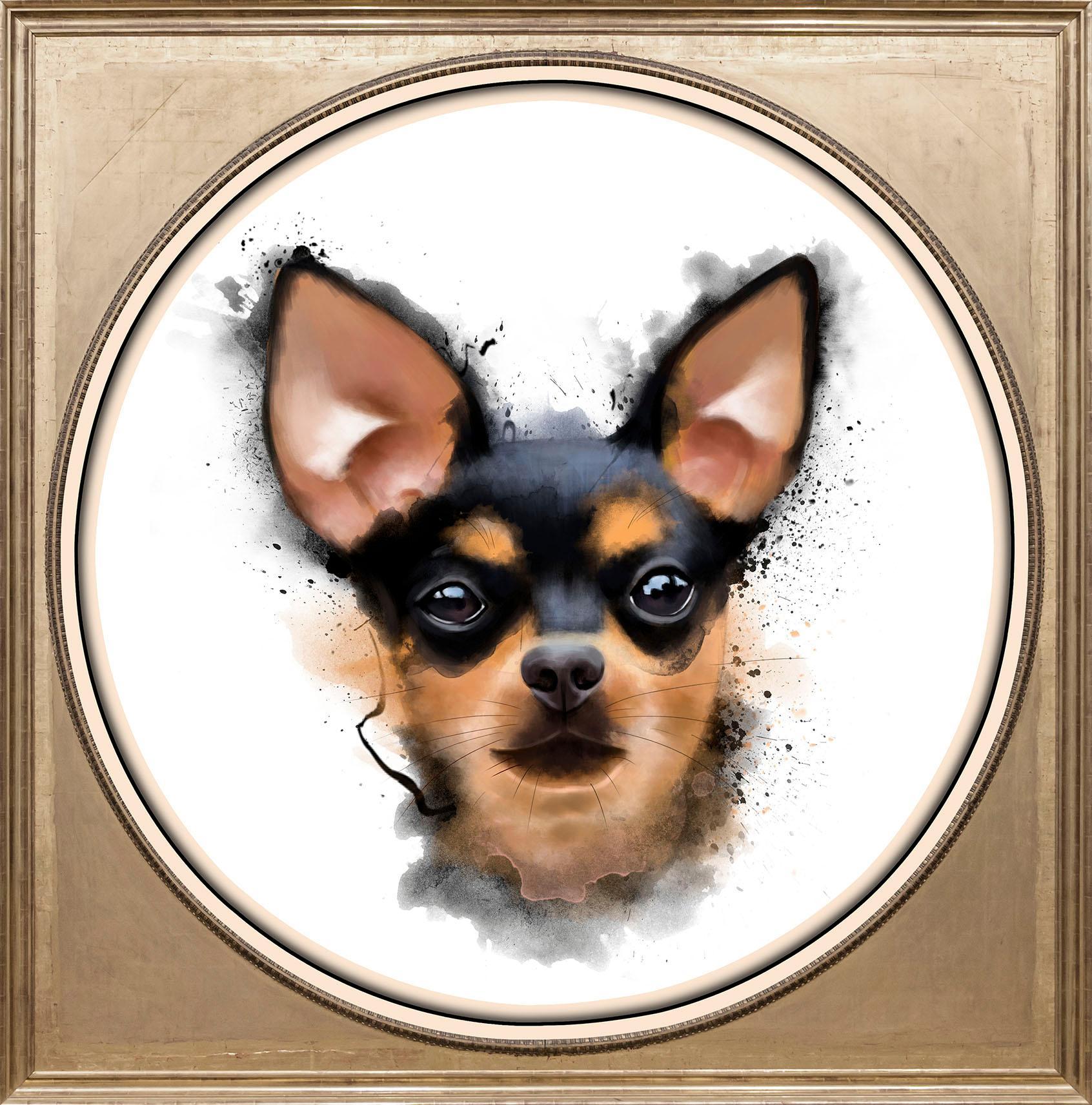 Acrylglasbild »Chihuahua«