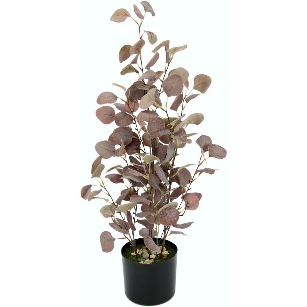 I.GE.A. Kunstpflanze »Eukalyptuspflanze«, im Kunststofftopf