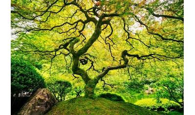 Home affaire Fototapete »Japanese Maple Tree« kaufen