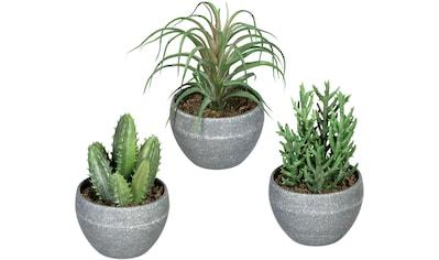 Creativ green Künstliche Zimmerpflanze »Sukkulenten«, im Melamintopf, 3er Set kaufen