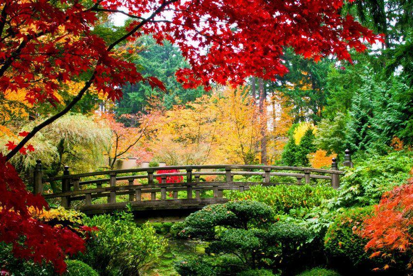 Fototapete Bridge in Japanese Garden, Home affaire grün Fototapeten Tapeten Bauen Renovieren