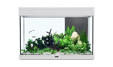 AQUATLANTIS Set: Aquarium »Fusion 80 LED 2.0«, 137 Liter, BxTxH: 80x40x55 cm, in versch. Farben kaufen