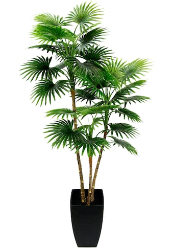 I.GE.A. Kunstbaum »Fächerpalme«, Im konischen Topf kaufen