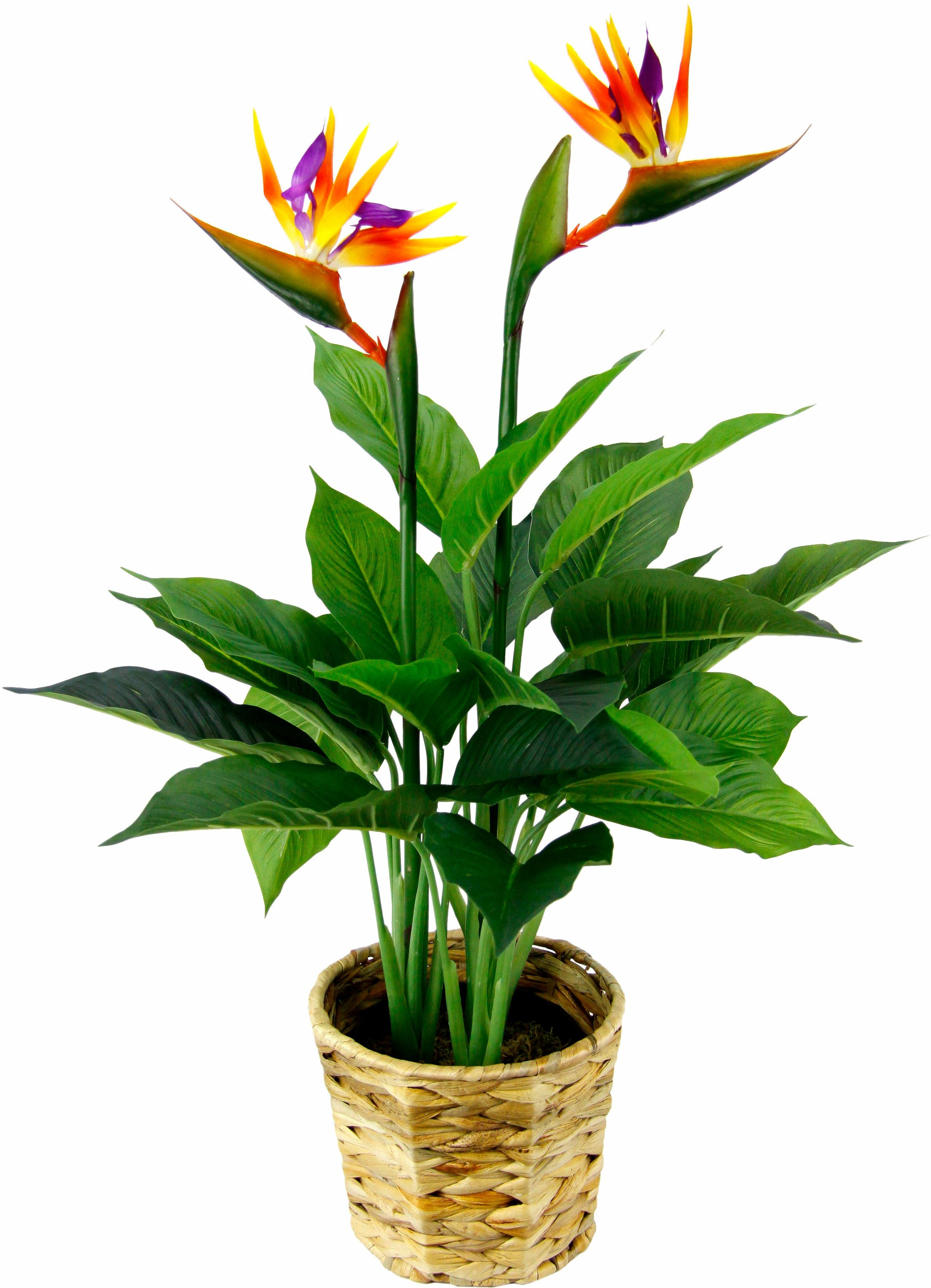 Kunstpflanze Strelitzienpflanze in Wasserhyazinthentopf Technik & Freizeit/Heimwerken & Garten/Garten & Balkon/Pflanzen/Zimmerpflanzen