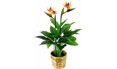 I.GE.A. Kunstpflanze »Strelitzienpflanze in Wasserhyazinthentopf« (1 Stück) kaufen