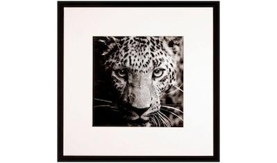 G&C Bild »WILD CAT« kaufen
