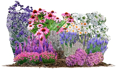 BCM Pflanzenset »Bienen - & Schmetterlingsgarten«, 18 Pflanzen kaufen