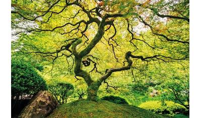 Papermoon Fototapete »Japanese Maple Tree« kaufen