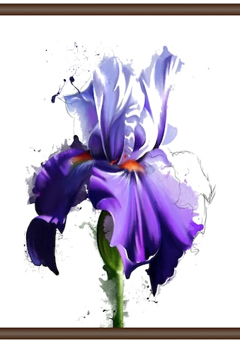 QUEENCE Leinwand »Lila Blüte«, Leinwand Rollbild 50x70 cm kaufen