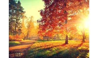 Papermoon Fototapete »Autumn Trees« kaufen