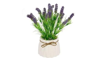 I.GE.A. Kunstpflanze »Lavendel«, Im Keramiktopf kaufen